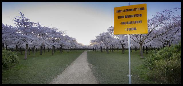 Corona warning in cherry blossom park