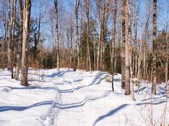 Enterprise Winter Silent Sports Trails