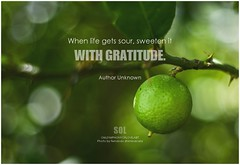 Author Unknown When life gets sour, sweeten it with gratitude