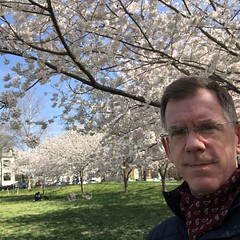 Paul with cherry trees in full bloom, Rose Park, Washington, D.C.