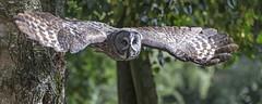 Hawk Conservancy Trust, Andover.