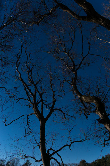 trees with a bue sky