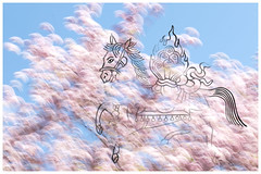 Windhorse and cherry blossom clouds.