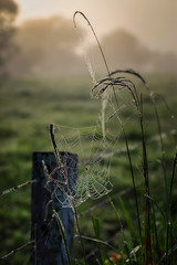 #8470 Web and Fog