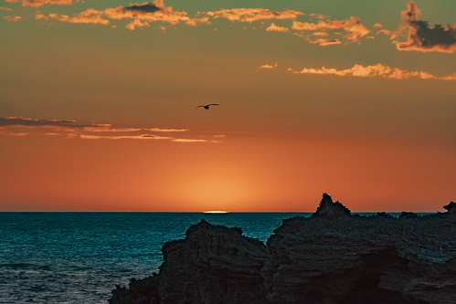 Seagull flying into the sunset Point Peron WA