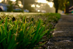 Close-up photo of grass and sidewalk with blurred background