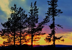 Sunset behind trees.