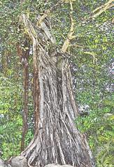 Gnarly tree transformation