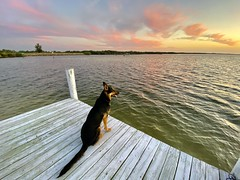 Sitting Seaside Soaking Sunday Sunset Scene, Dog's Dock Dusk Delight - IMRAN™