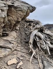 Rocks with a Twist
