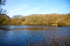 Landscapes & New Forest