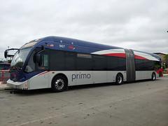 967 100 (08) Fredericksburg PRIMO
