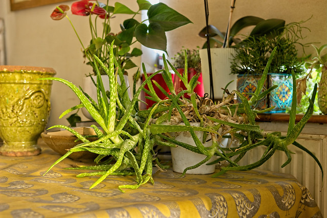 The other triffid