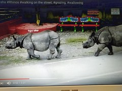 A screen shot from a YouTube video showing rhinos roaming around the streets of Sauraha