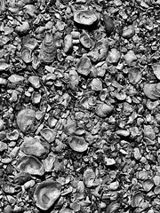 Oyster Shell Path