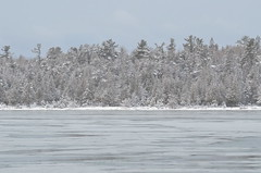 Snow Covered trees along Bass Cove - Drummond Island during the winter