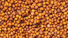 Mustard Seeds (Sarson)