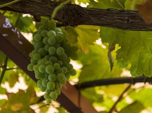 Sandalford Wines / Винодельня Сандалфорд