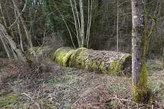 Abandoned concrete pipes @ Annecy-le-Vieux