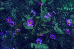Loving the Flora
