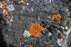 Vesicular basalt with encrusting lichen (Hell's Half Acre Lava Field, Holocene, 5.2 ka; northeast of Blackfoot, Idaho, USA) 1