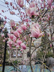 Magnolias With Empty Playground