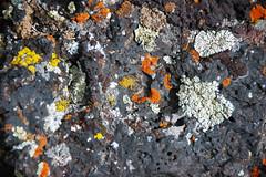 Vesicular basalt with encrusting lichen (Hell's Half Acre Lava Field, Holocene, 5.2 ka; northeast of Blackfoot, Idaho, USA) 2