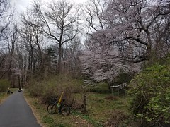 2020 Bike 180: Day 31 - Wild Cherry