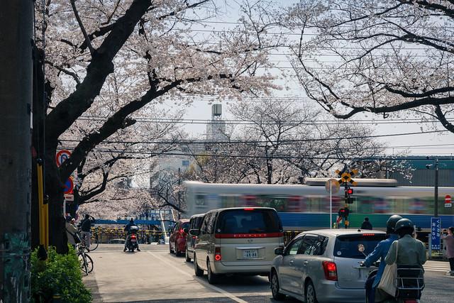桜並木と西武線 ③