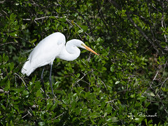 Great Egret River Club Bradenton Florida