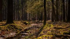 Waldspaziergang ...