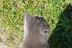 Cat @ Villaz