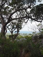 Karris, Granite & Sea - Birthday Hike, Mt Hallowell, Denmark, Western Australia