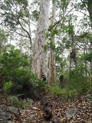 Tree Hugger - Birthday Hike, Mt Hallowell, Denmark, Western Australia