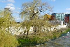 Riverside Trees, Morden Wharf
