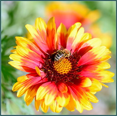 Spring Bees Jammin!