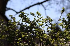 Frühlingshimmel