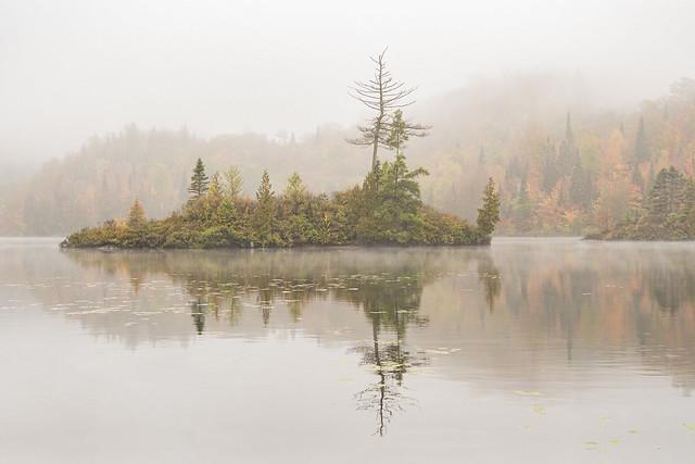 Jardin de brume sur le lac