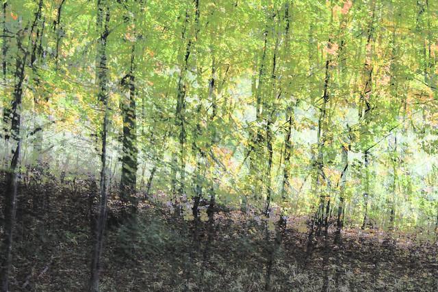 Impressions de forêts