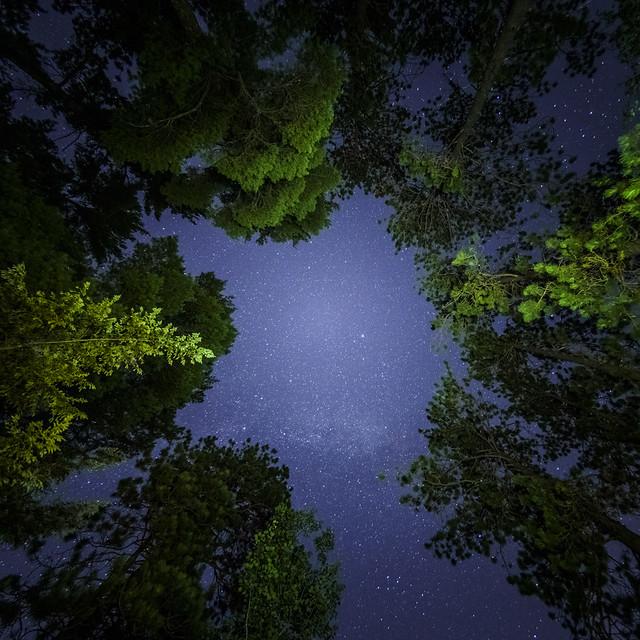 La clairière étoilée