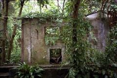 Villa in the jungle