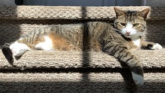 Amelia #cat on sunny stairs