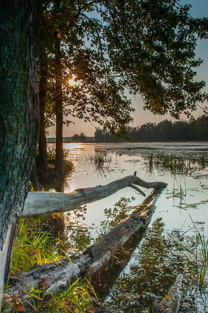 Éveil à l'étang