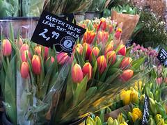 Frische rot-gelbe Tulpensträuße zum Verkauf