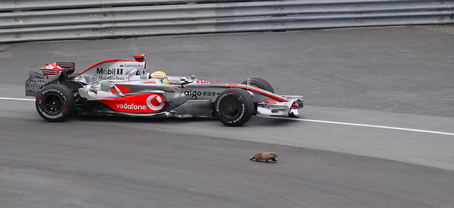 Woody woodchuck takes on Lewis Hamilton