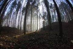 Nebel Sonne