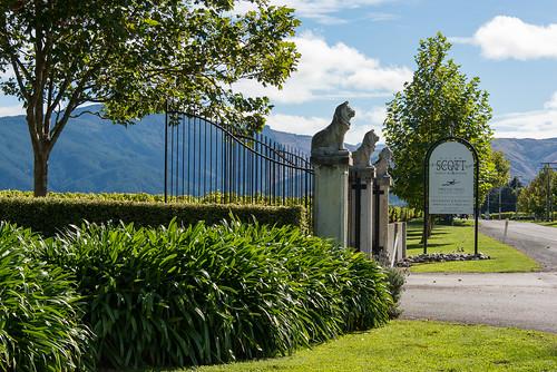 NZ - South Island wine country, Blenheim, Marlborough