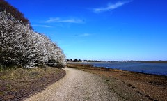 View of Langstone Harbour 2