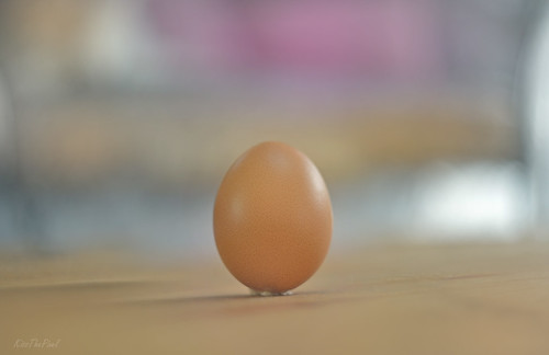 The Simple Egg... Egg'ceptional