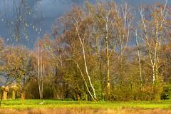 Springtime / Lente - Steinse Groen - Haastrecht - NL 🇳🇱